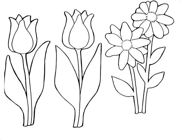 A Pair Of Parrot Tulips And Daisy Coloring Page : Kids