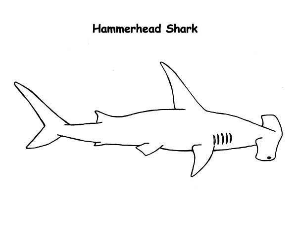 A Realistic Drawing Of Hammerhead Shark Coloring Page