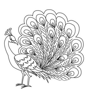 A Cartoon Imagery Of Peacock Coloring Page : Kids Play Color