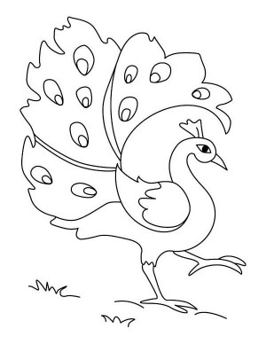 peacock drawing simple coloring easy drawings pages sketches colorful sketch peacocks clipart colouring cliparts play printable colors google clip kid