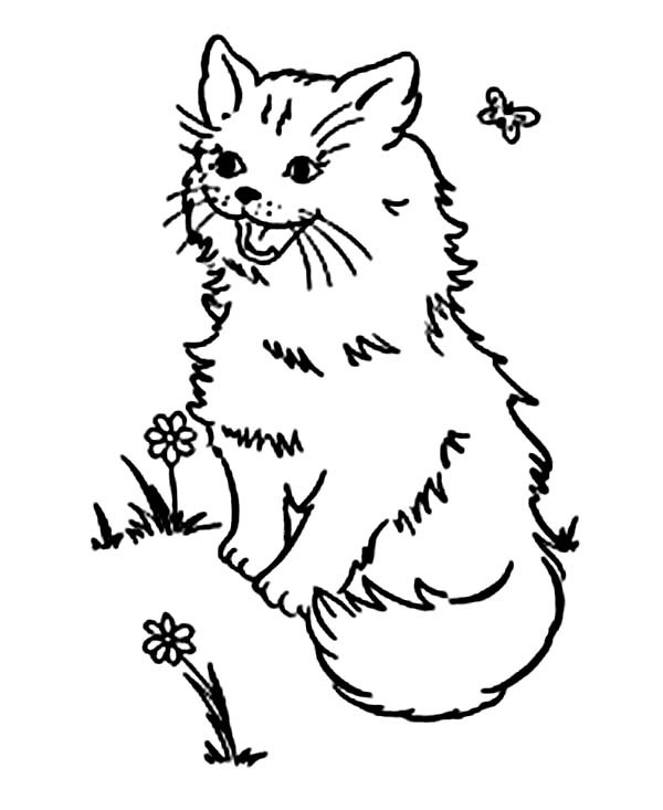 A Pluffy Kitty Cat Playing On The Park Coloring Page
