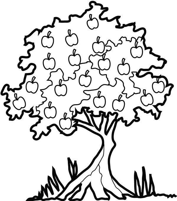 Apple Tree In The Forest Coloring Page : Kids Play Color