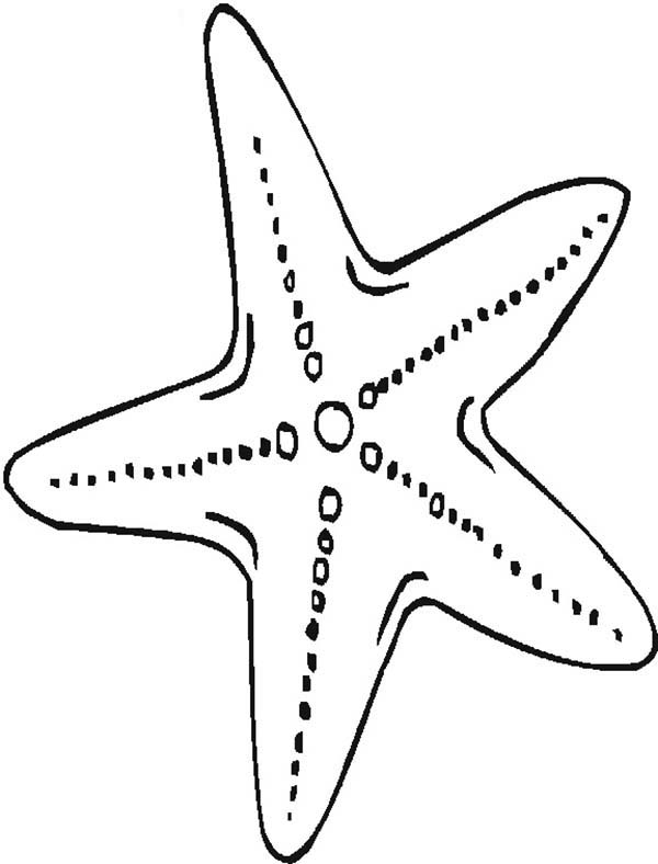Mother Starfish Coloring Page : Kids Play Color