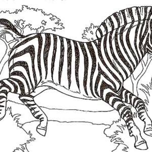 Marty Of Madagascar In Zebra Coloring Page : Kids Play Color