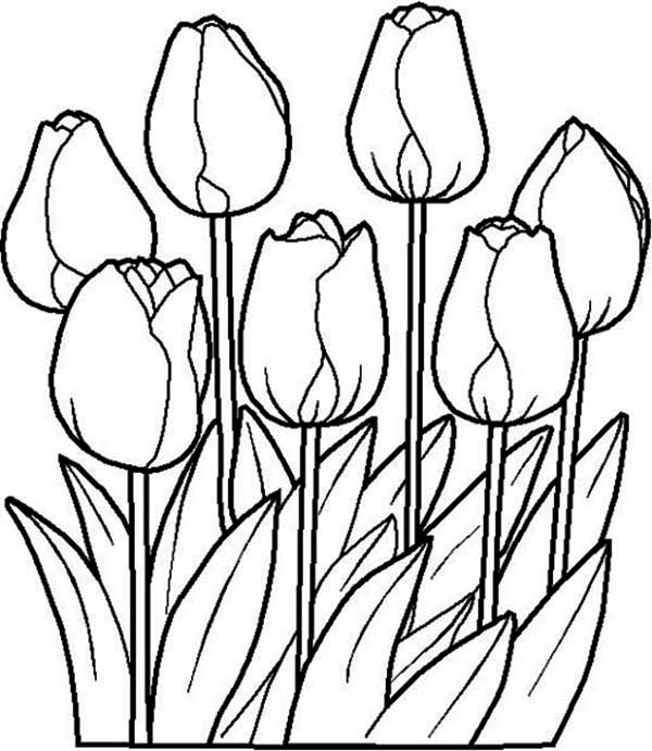 Beautiful Tulip Flower Coloring Page : Kids Play Color | colouring pages tulip flowers