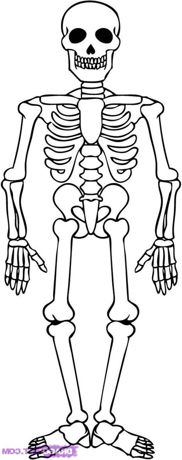Awesome Skeleton Drawing Coloring Page : Kids Play Color