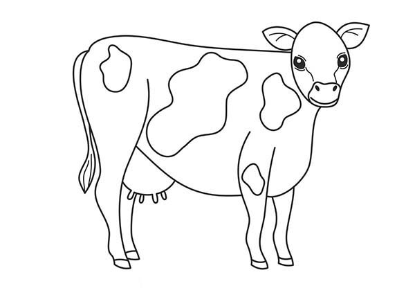 Black And White Cow Complexion Coloring Page : Kids Play Color