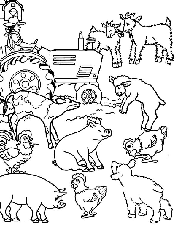 Farm Animal Activities Coloring Page : Kids Play Color