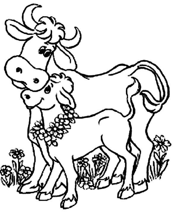 Indian Cow And Her Baby Cow Coloring Page : Kids Play Color