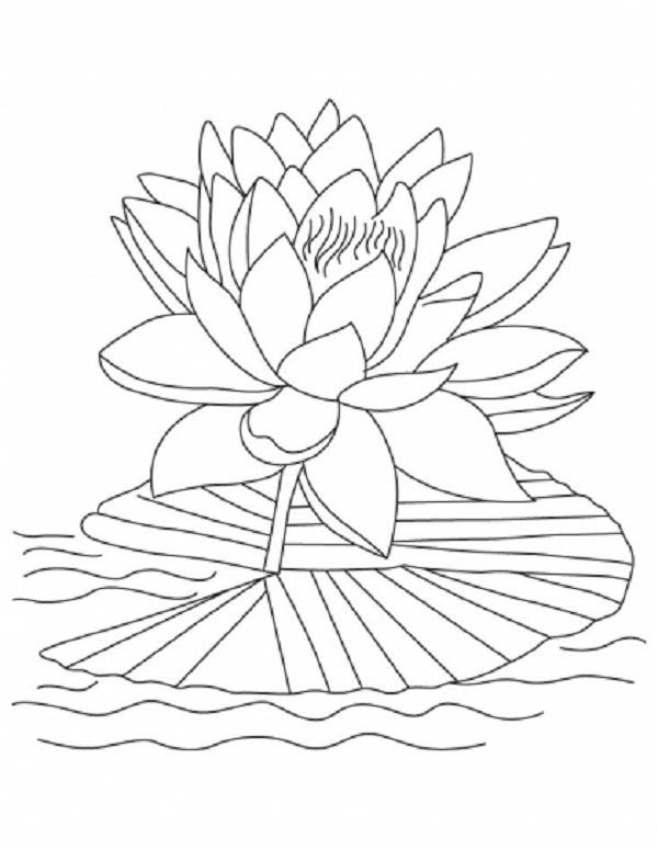 Lotus Flower Reopen And Bloom Coloring Page : Kids Play Color