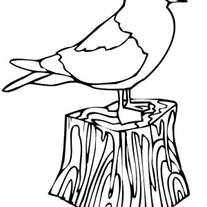 White Headed Seagull Coloring Page : Kids Play Color