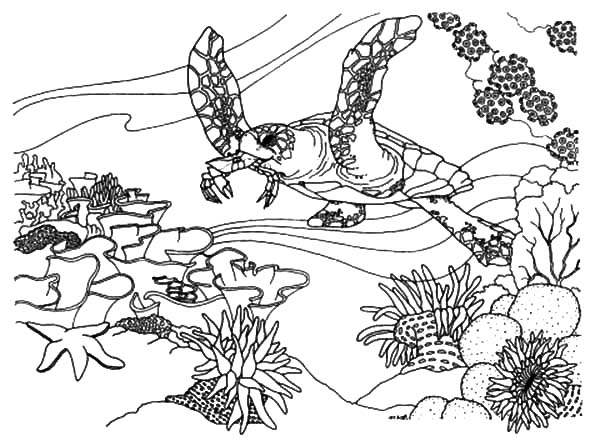 Coral Reef Fish Ecosystem Coloring Pages : Kids Play Color