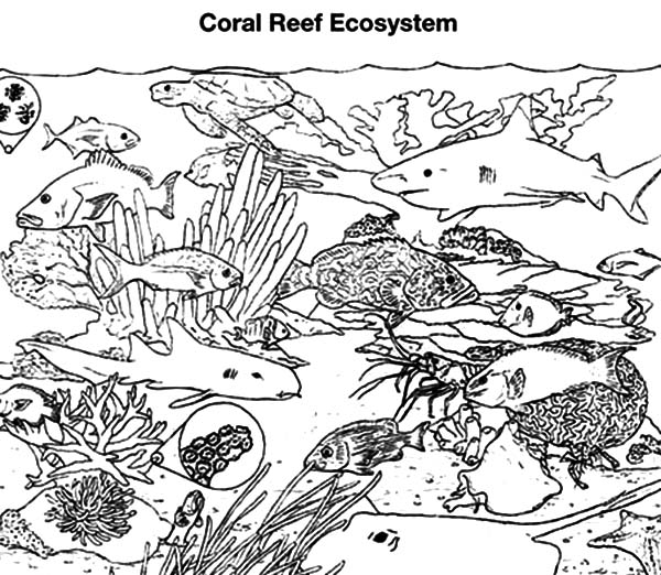 Coral Reef Fish Gathering Coloring Pages : Kids Play Color