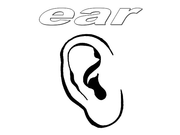 Ear Coloring Pages : Kids Play Color