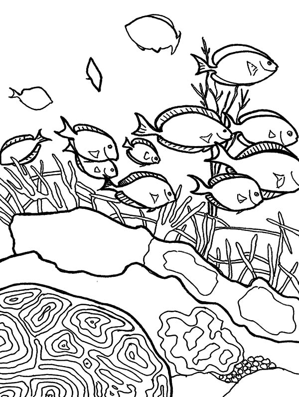 School Of Coral Reef Fish Coloring Pages : Kids Play Color