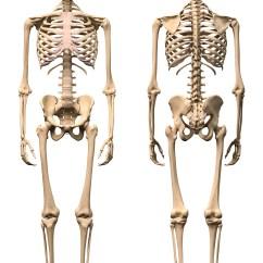 Human Skeleton Diagram Without Labels Front Samsung Dlp Tv Parts Kidspressmagazine