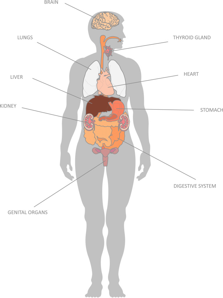 hight resolution of internal organs