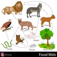 Simple Food Chain Diagram 97 Jeep Tj Stereo Wiring Web Kidspressmagazine