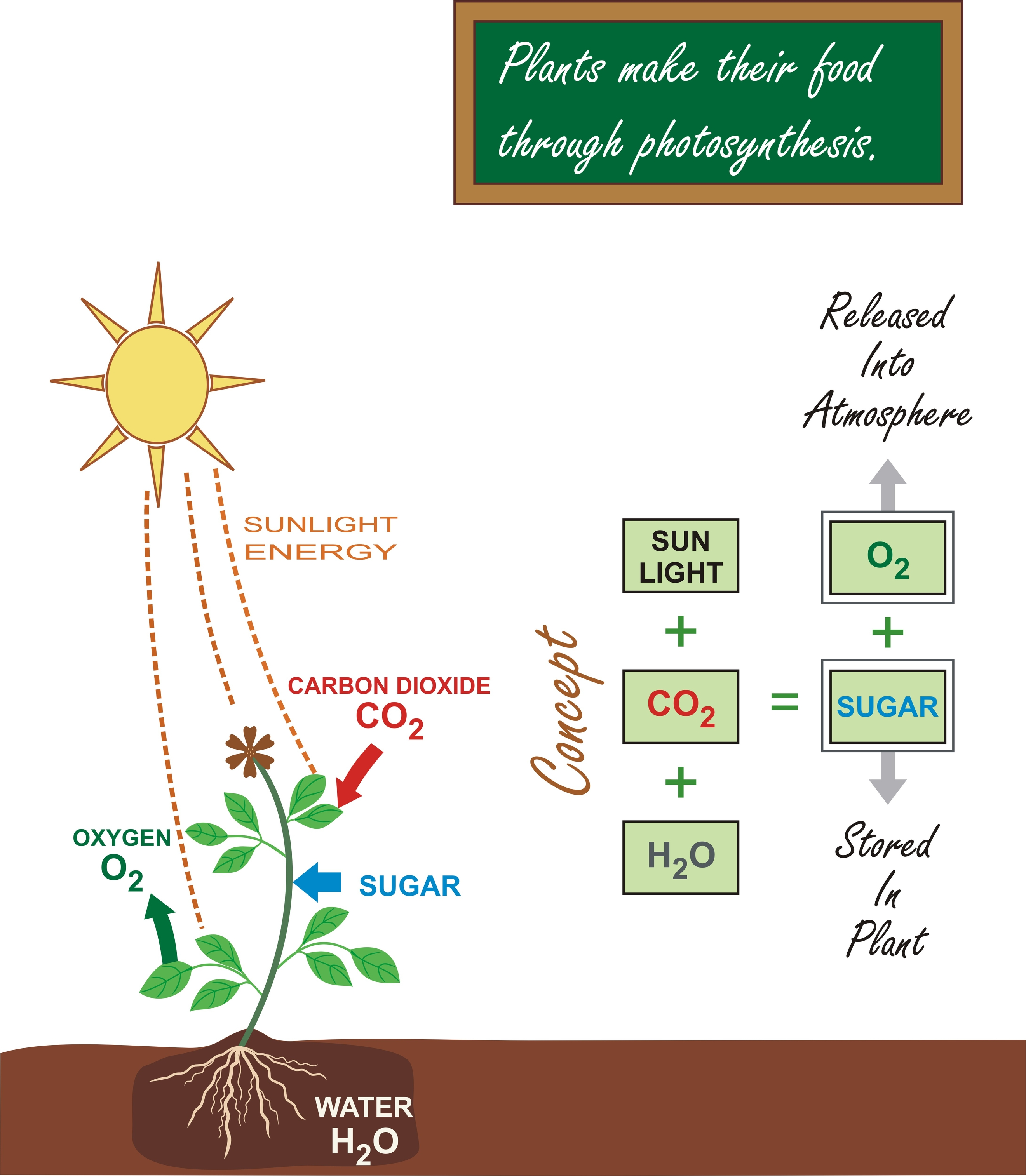 draw a diagram of photosynthesis 400m track kidspressmagazine