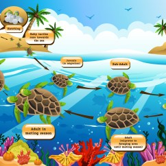 Sea Turtle Life Cycle Diagram Back Of Iphone 4s Turtles Kidspressmagazine