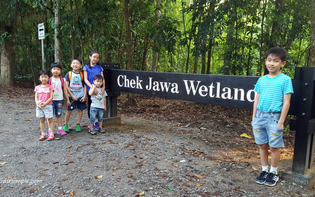 Chek Jawa Guided Tour in Pulau Ubin – a living classroom