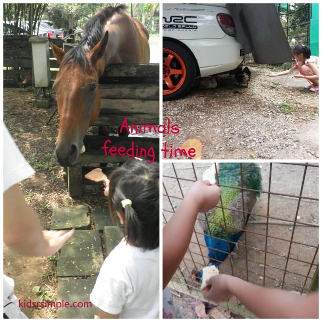 Animals feeding time