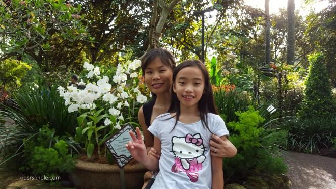Stephanie Sun orchid