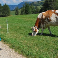 Glückliche Kinder, entspannte Eltern - Urlaub auf dem Bauernhof in Südtirol