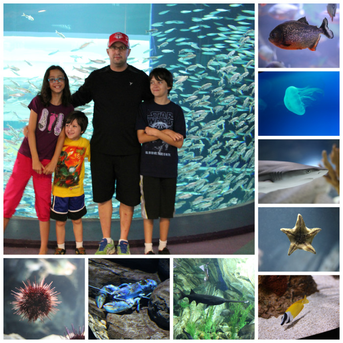 aquarium collage