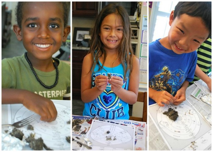 Dissecting Owl Pellets with Kids- Kid World Citizen
