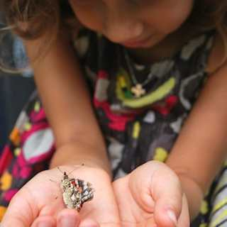 Nature Watch: Exploring Bugs & Critters with Kids