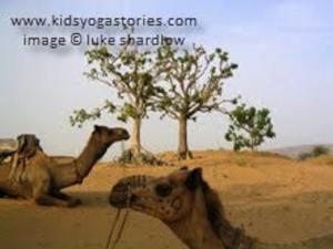 India Camel- Kid World Citizen