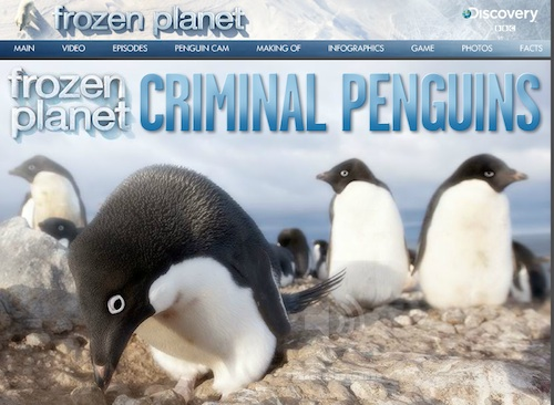 Penguin Online Game- Kid World Citizen