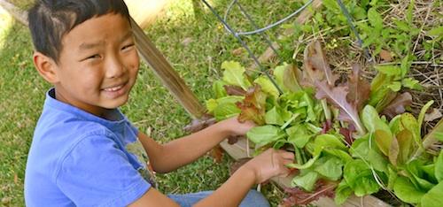 French Salad- Kid World Citizen