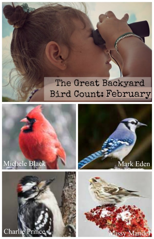 Backyard Bird Count- Kid World Citizen