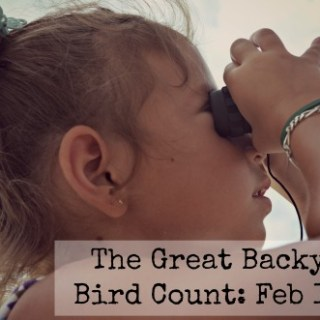 The Great Backyard Bird Count!
