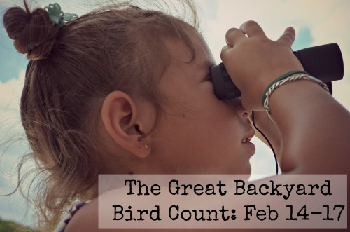 Great Backyard Bird Count- Kid World Citizen