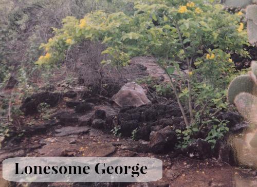 Lonesome George- Kid World CItizen