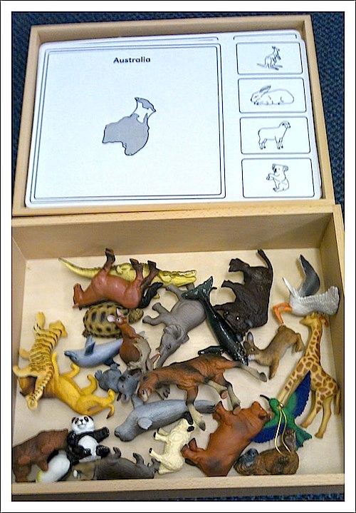 Australia Animals Montessori Geography- Kid World Citizen