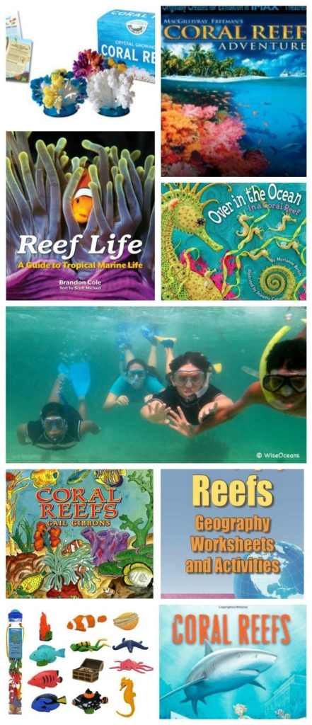 Coral Reefs Lessons for Kids- Kid World Citizen