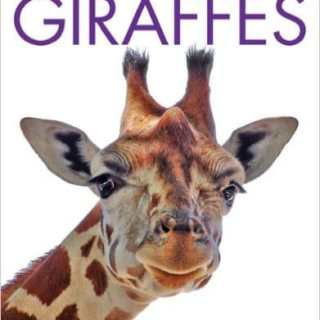 Learn about Giraffes! Facts, Books, Videos