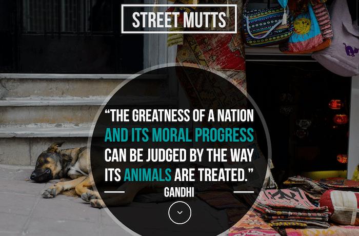 Street Mutts Fundraiser- Kid World Citizen