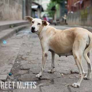 Street Mutts Kids Volunteer- Kid World Citizen