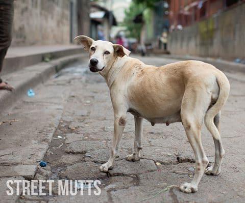 Street Mutts Kids Volunteer- Kid World Citizen