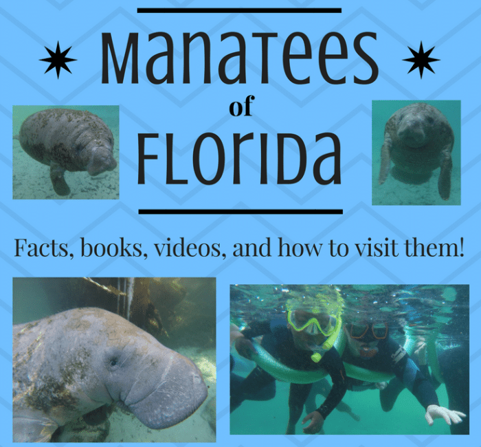 Learn about Manatees Florida- Kid World Citizen