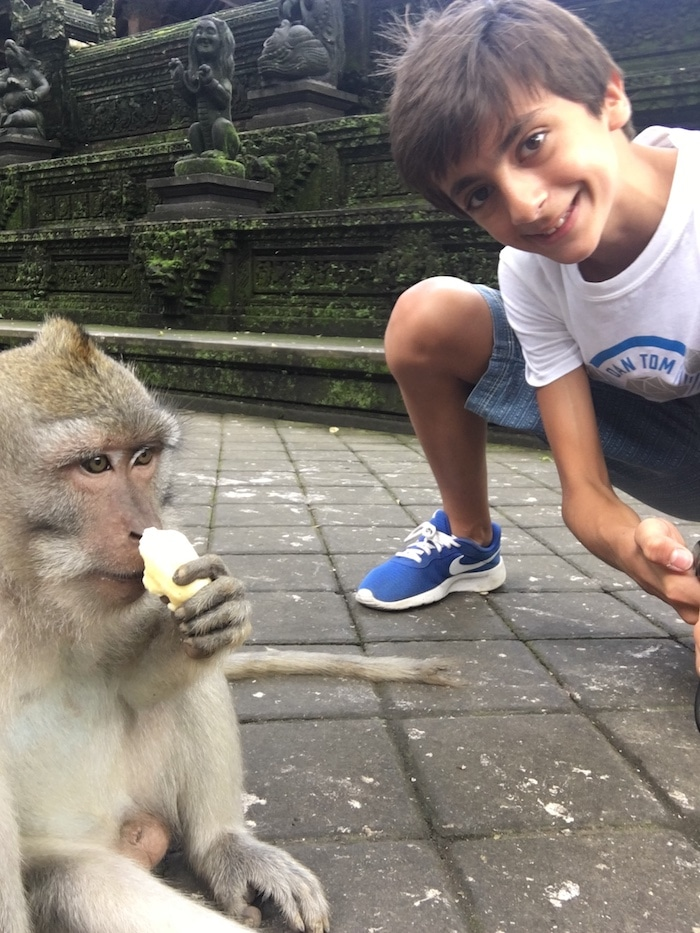 Travel Bali with Kids Monkeys- Kid World Citizen
