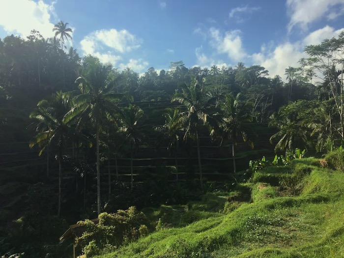 Travel Bali with Kids Rice Terraces- Kid World CItizen