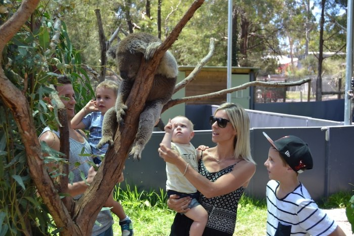Healesville Sanctuary Mums Little Explorers- Kid World Citizen