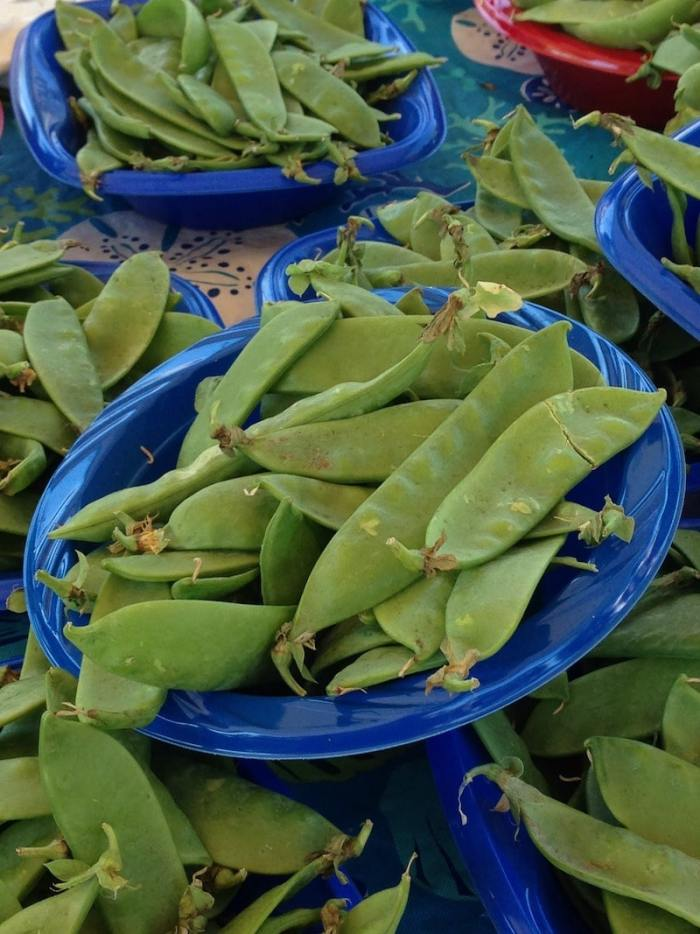 Chinese Vegetable Garden Snow Peas- Kid World Citizen