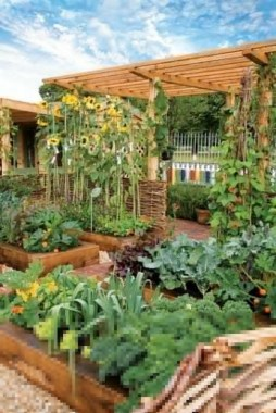 19 Best DIY Vegetable Garden Ideas 23